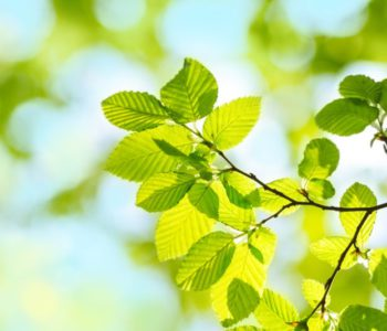 Spring green Leafs - colorful Background Blur